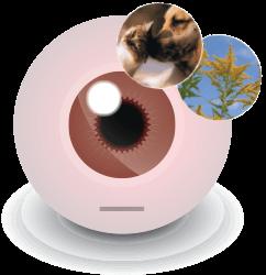 Allergy eyeball irritation